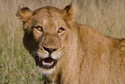 Kruger National Park April 9-15 2011